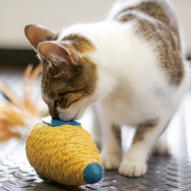 Carrot Cat Roll Toy