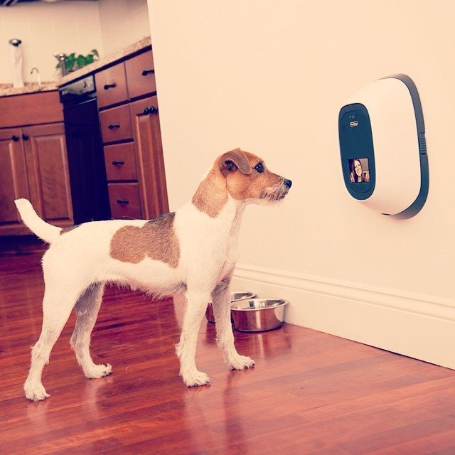 PetChatz Great & Treat Videophone