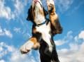FitBark Dog Activity Tracker