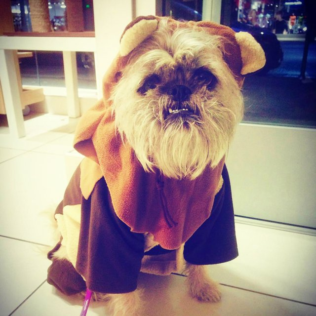 Ewok Dog Costume & Ewok Dog Costume » Petagadget