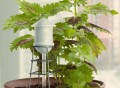 City Water Plant Self-Waterer
