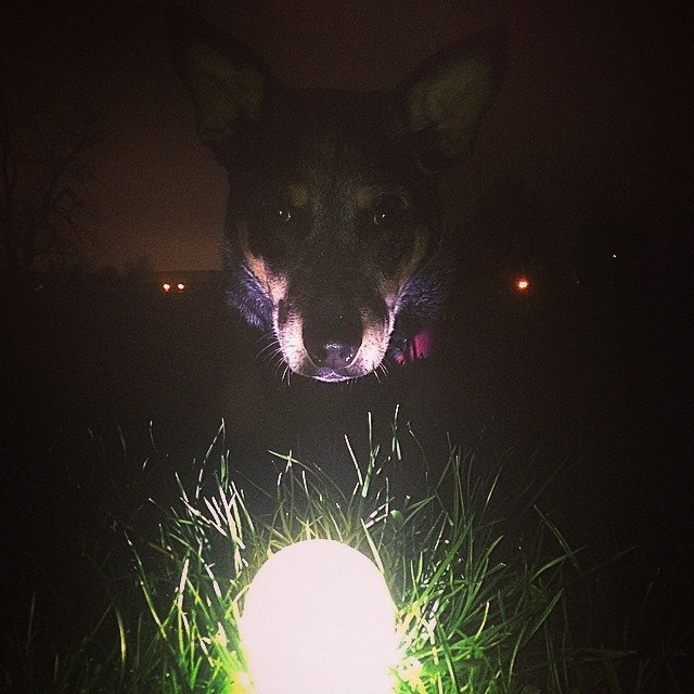Chuckit Max Glow Toy Ball