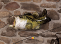 Inflatable Bass