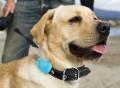 Hachiko Smart Dog Sensor