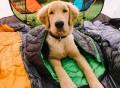 Highlands Dog Sleeping Bag