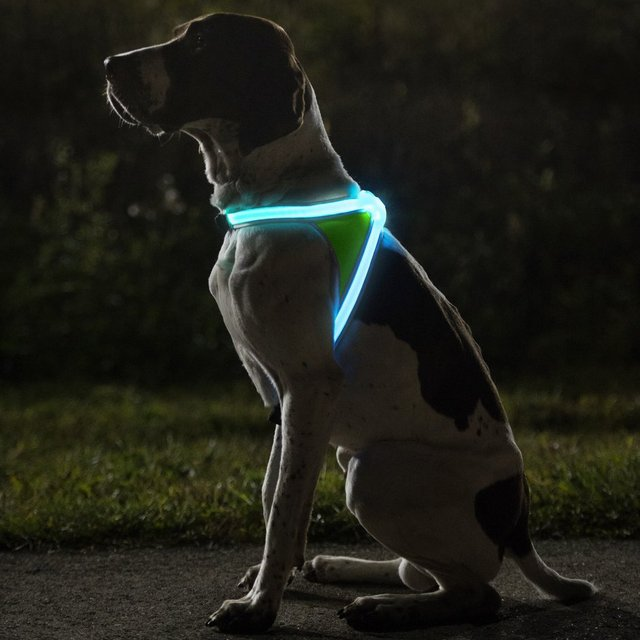Noxgear LightHound Illuminated Dog Vest