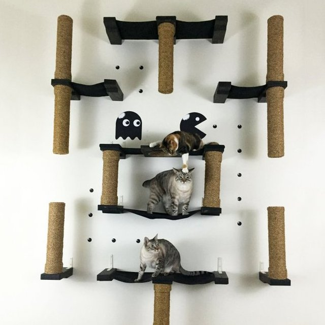 PacMan Cat Complex