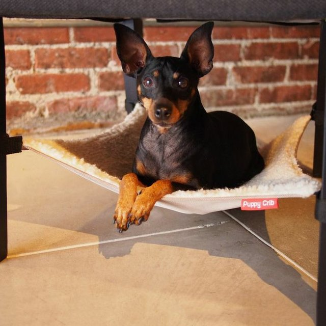 Puppy Crib Hammock