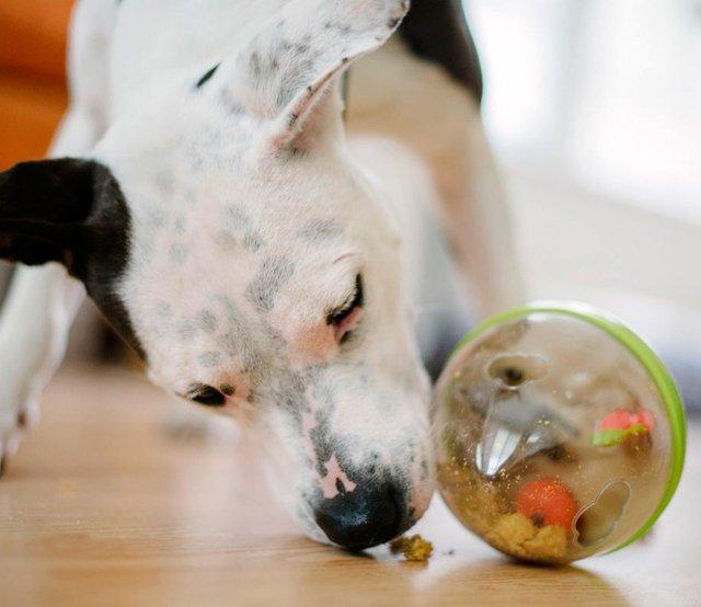 Wobble Ball Enrichment Dog Toy 2.0