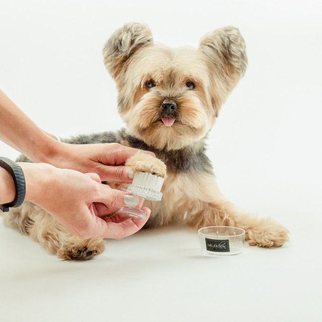 Paw Or Face Brush by Dog Fashion Spa