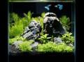 Desktop Pico Aquarium Set