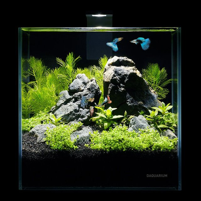 Desktop Pico Aquarium Set