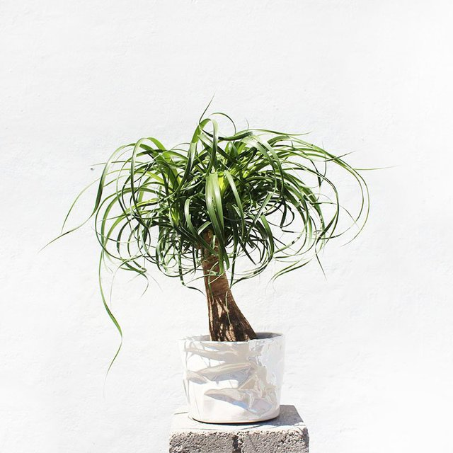 Wrinkle Flower Pot