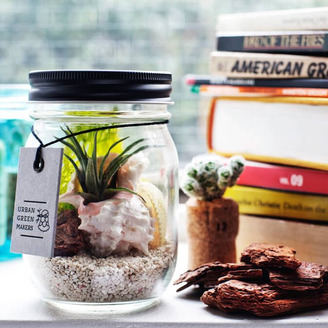 Glass Jar Terrarium Kit