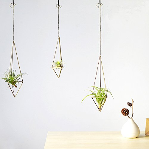 Himmeli Wall Sconce for Airplant Tillandsia
