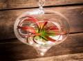 Hanging Teardrop Glass Terrarium