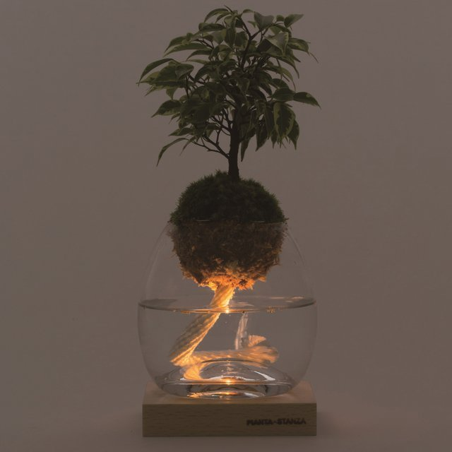 Torch Plant Light Botanical Candle