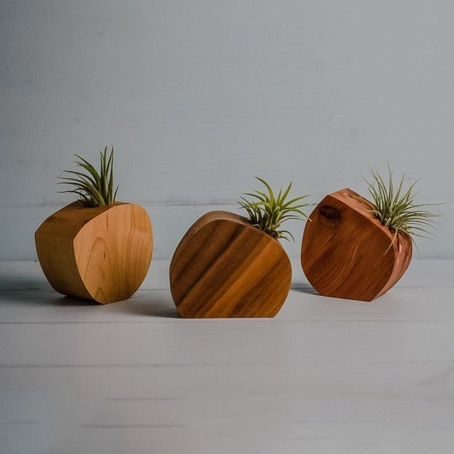 Round Cut Off Air Plant Vase by District 31