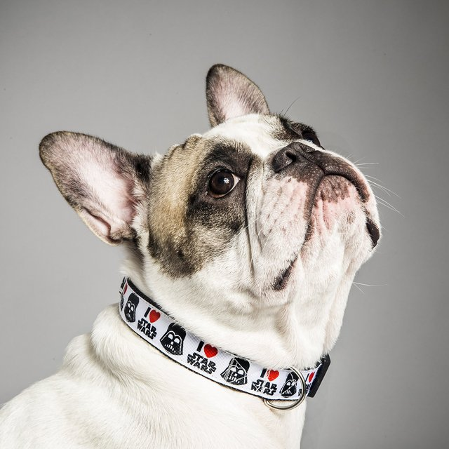 Sky Wagger Dog Collar