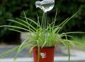 Glass Plant Watering Bird