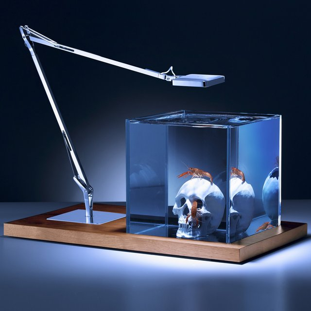 Isolate Aquarium Silver Skull Edition
