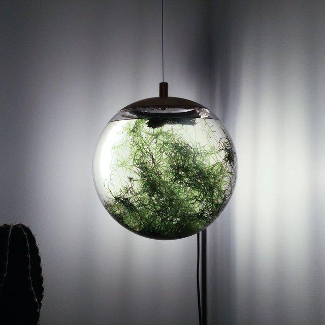 Globe Aquatic Terrarium