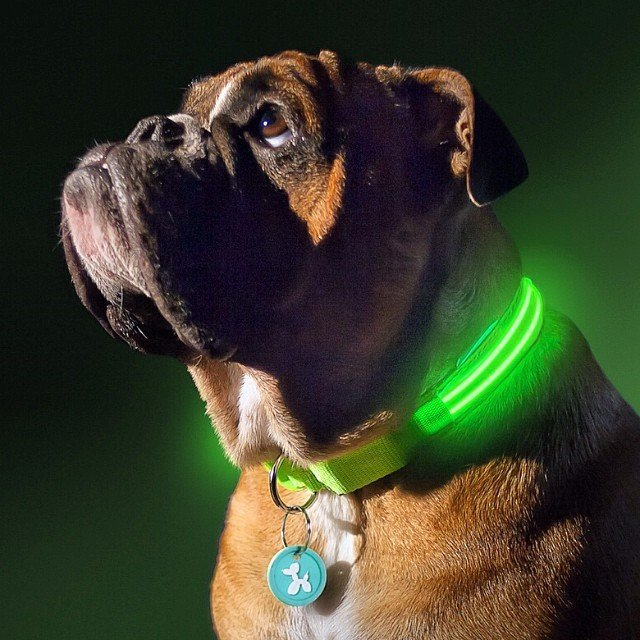 Poochlight Flashing Collar