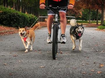 walkydog-plus-dog-bike-leash-5