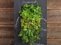 GroVert Living Chalkboard Wall Planter Kit