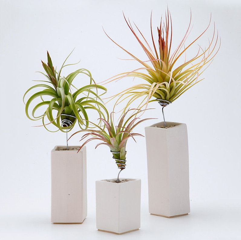 AirplantVessel Ceramic
