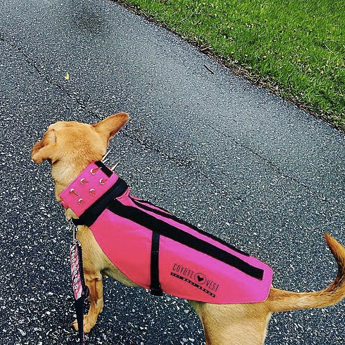 CoyoteVest Pet Body Armor