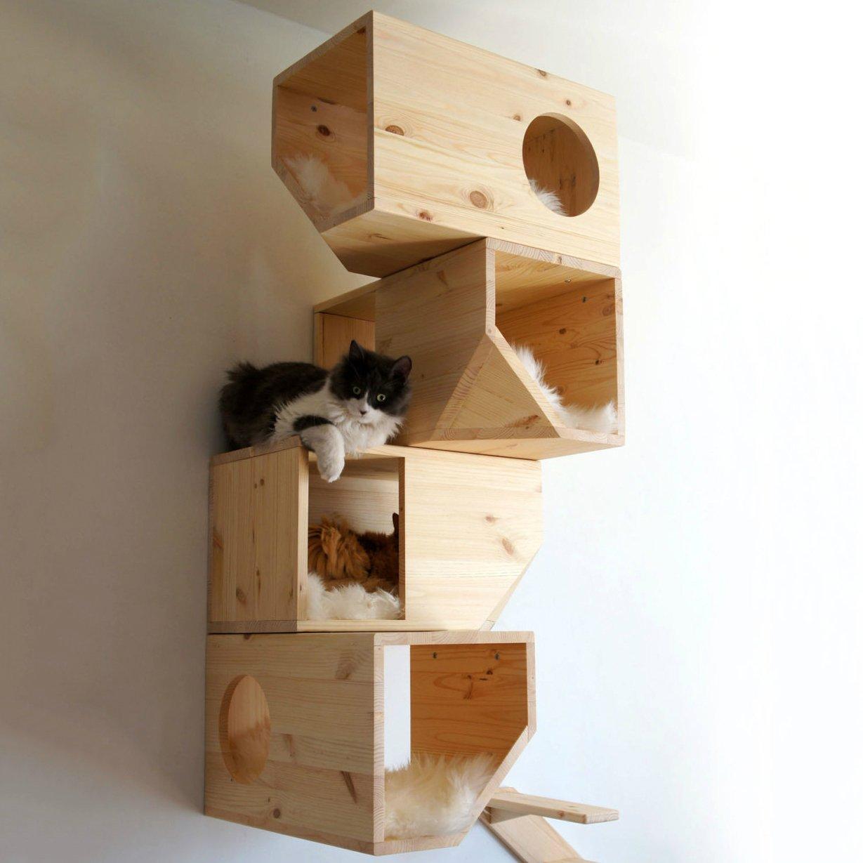 bengal cat for sale ohio