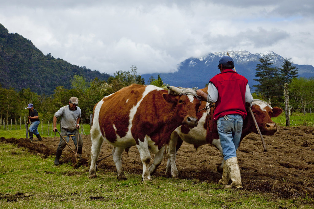 Capturing the Vanishing Gaucho Traditions of Southern Chile