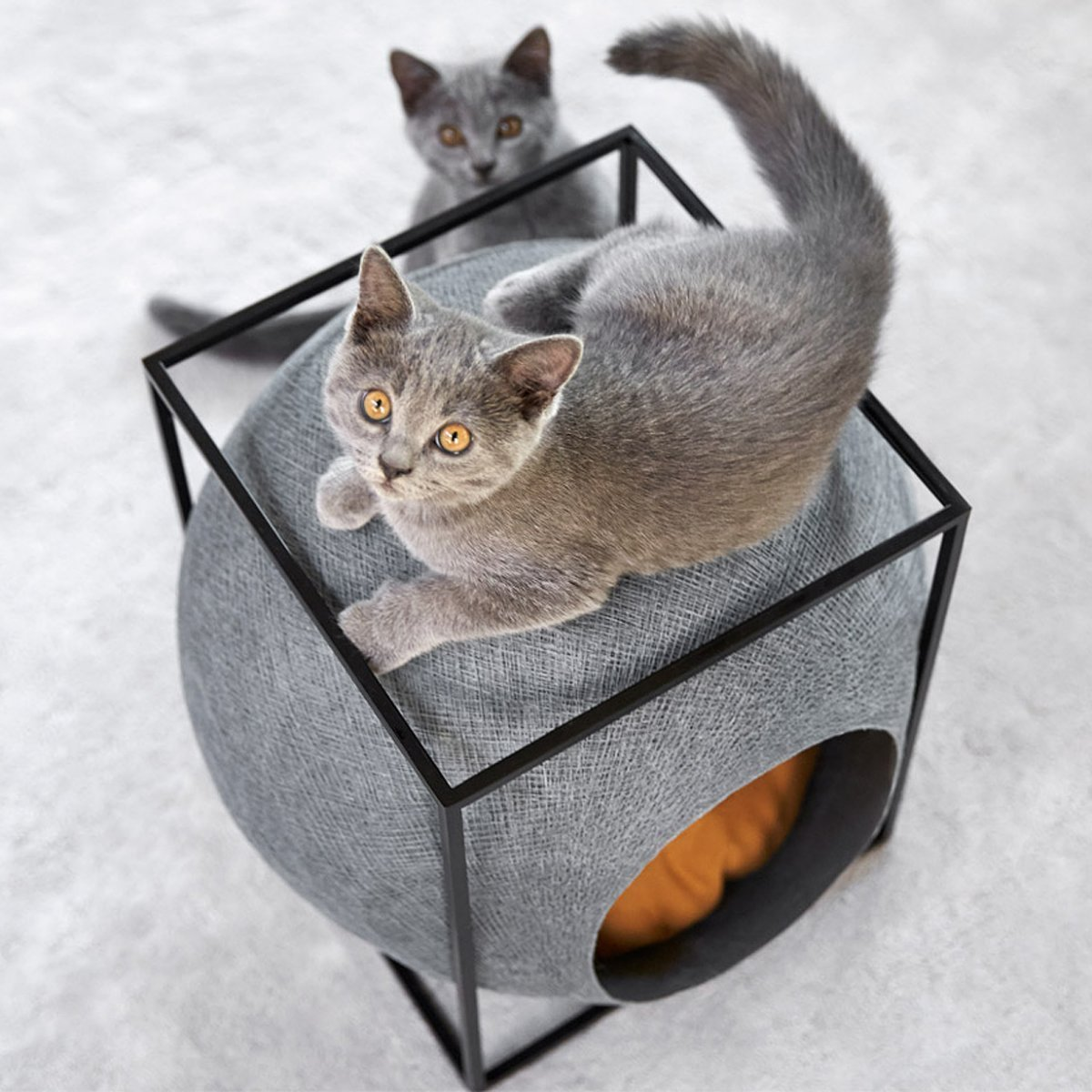The Cube Cat Kennel with Black Structure
