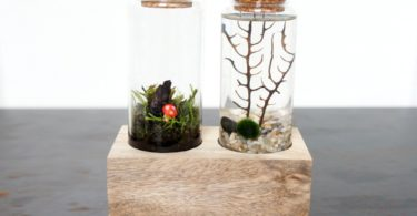 Land & Sea Terrarium Set