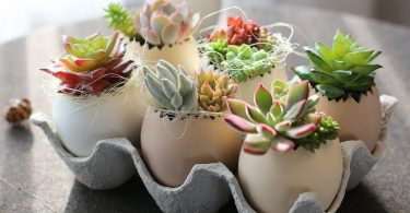 Egg Garden Flower pot