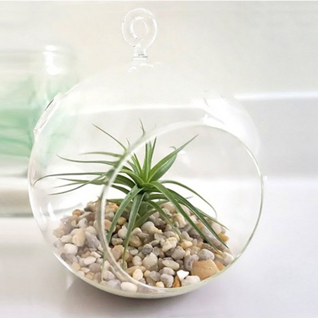 Glass Hanging Planter Terrarium Globe 187 Petagadget