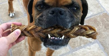 MONSTER Braided Bully Stick for Dogs