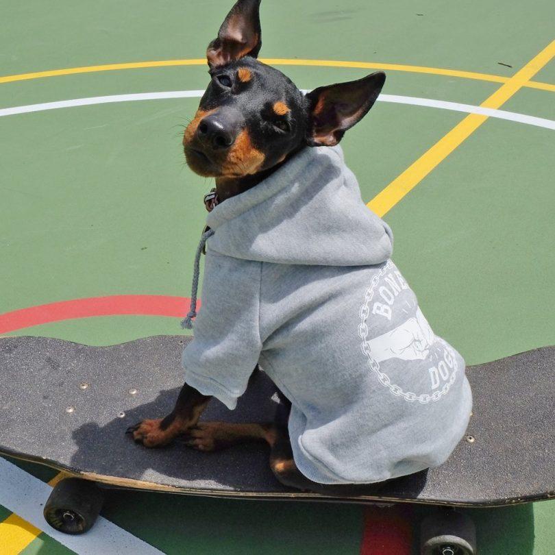 Bones Dog Hoodie