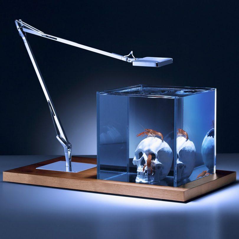 Isolate Aquarium Silver Skull Edition
