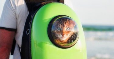 Bubble Pet Carrier Backpack