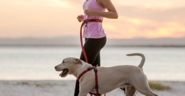 Road Runner Hands Free Leash