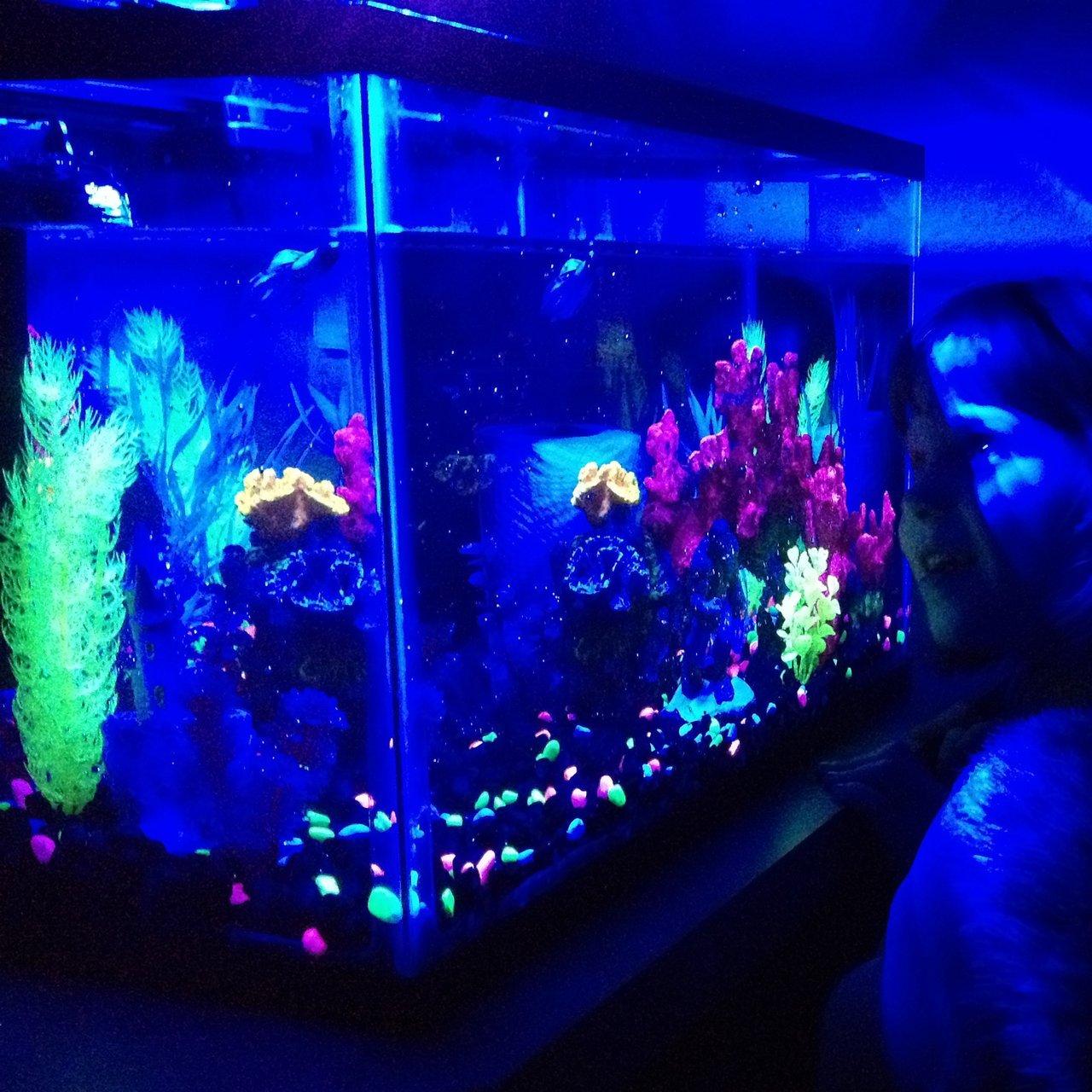 glofish aquarium kit 187 petagadget