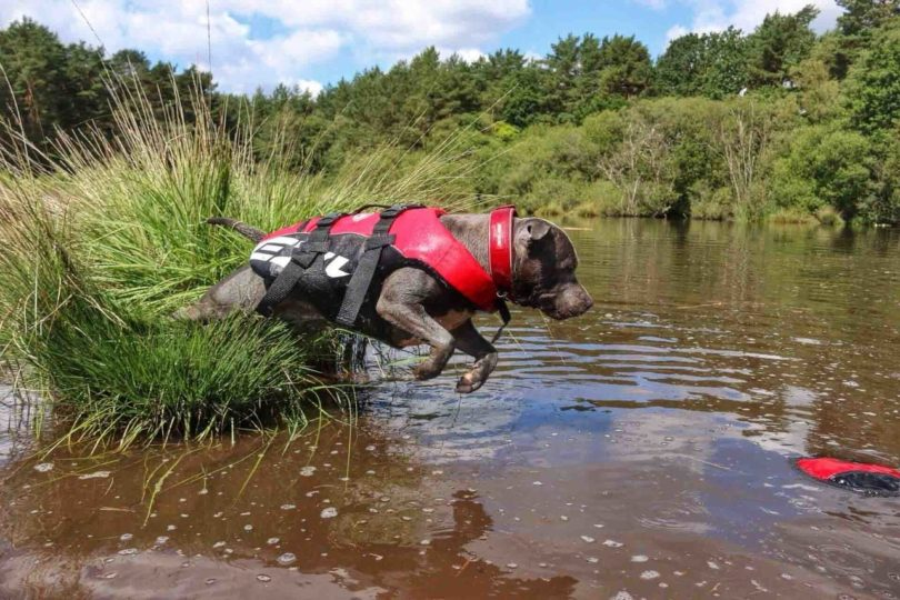 EzyDog Doggy Flotation Device