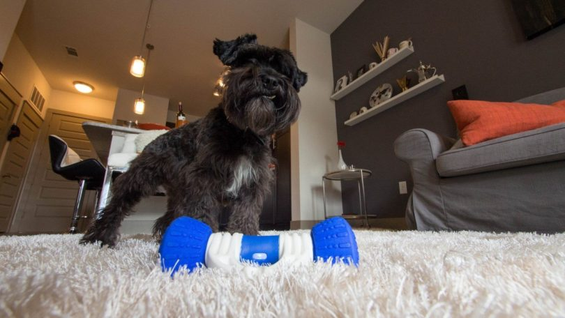 GoBone Smart Dog Toy