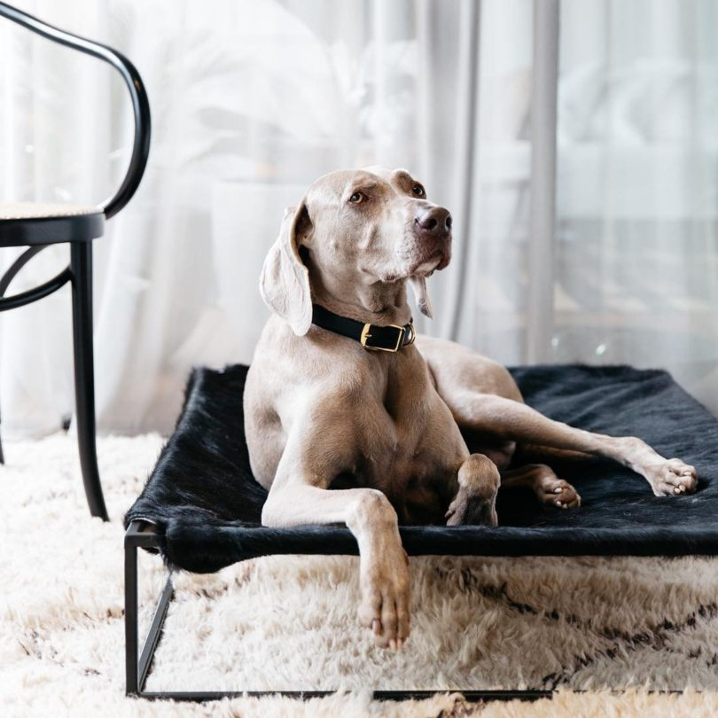Angus Hide Leather Dog Bed
