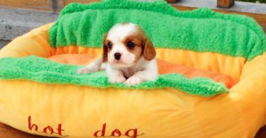 Hot Dog Design Pet Dog Bed