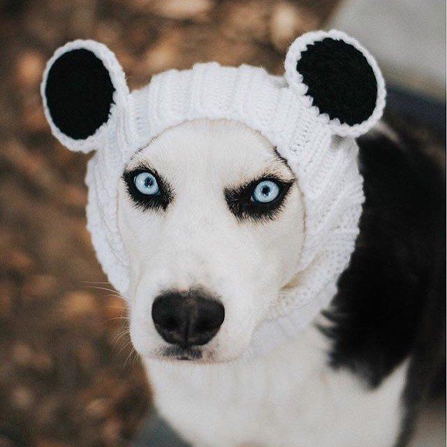 Panda Bear Zoo Snood