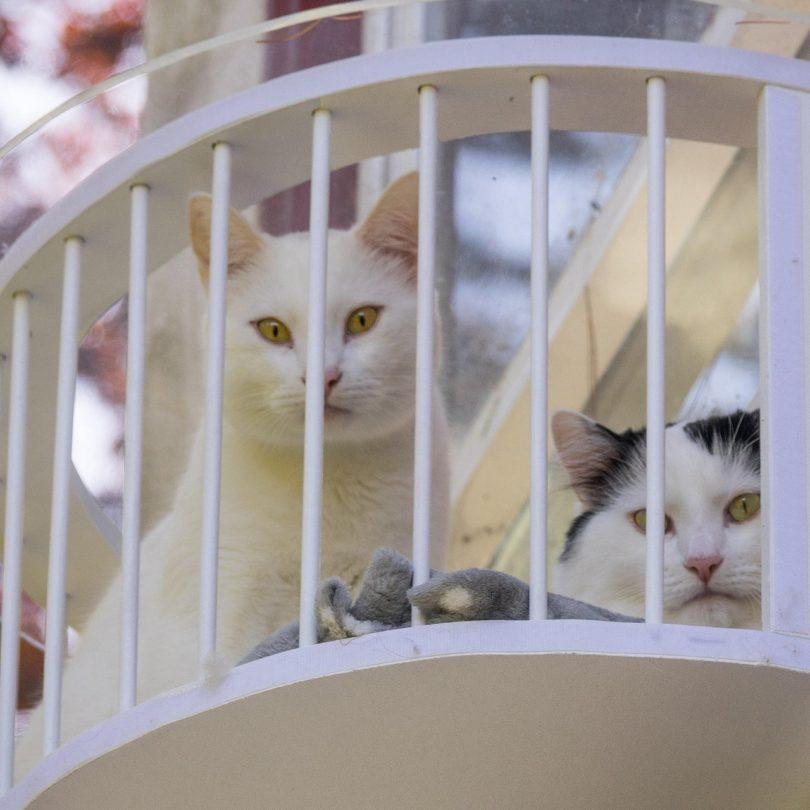 Cat Solarium Penthouse