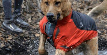 Aegis All-Weather Dog Jacket